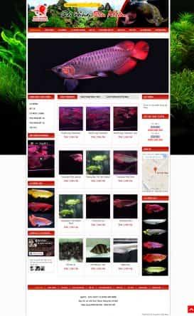 Website cá cảnh Cá Rồng Bin Nhím